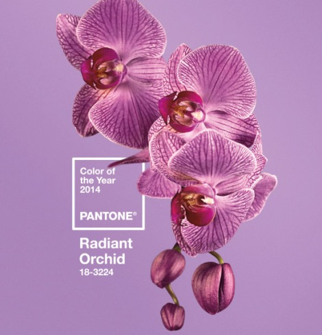 pantone-2014-color-year-radiant-orchid